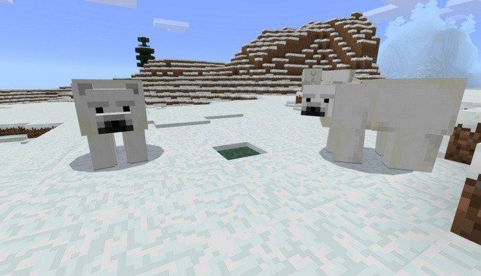 Bears are white as snow